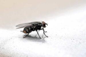 Getting Rid of Bathroom and Kitchen Drain Flies