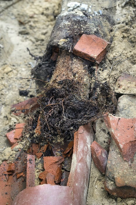 Keeping Roots from Growing in Sewer Lines