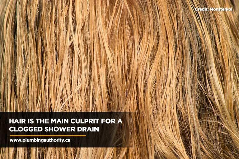 Hair is the main culprit for a clogged shower drain