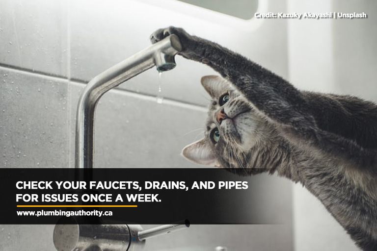 Check your faucets, drains, and pipes for issues once a week.