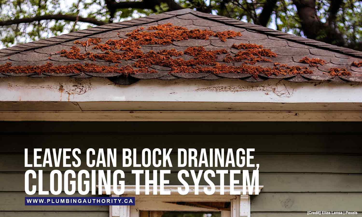 Leaves can block drainage
